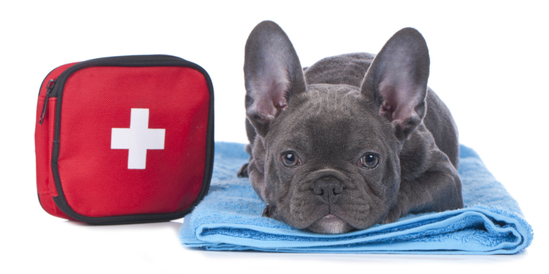 your pet can go from healthy to needing emergency vet services