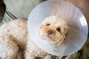 What to Expect After You Neuter Your Pet