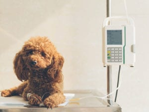Get the Best Care for Your Dog at a Dog Hospital